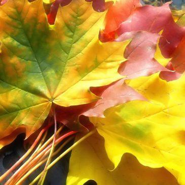 25 октября — праздник для детей «Золотая осень»